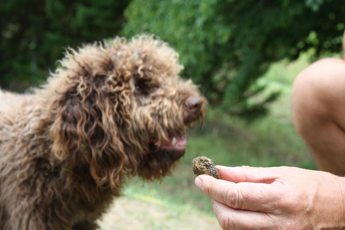 Dordogne - Trueffelzüchter mit jungem Hund