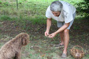 Dordogne - Trueffelzüchter auf der Suche