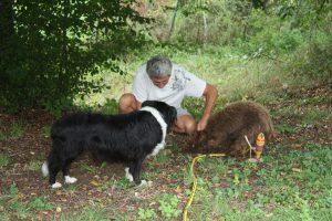Dordogne - Trueffelzüchter mit Hunden