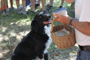 Dordogne - Trueffelzüchter mit Hundin