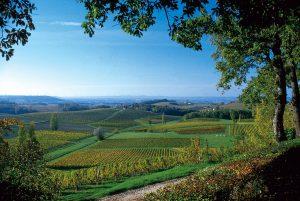 Dordogne Weinberge
