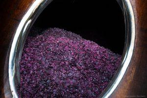 vinifikation-rotwein-medoc