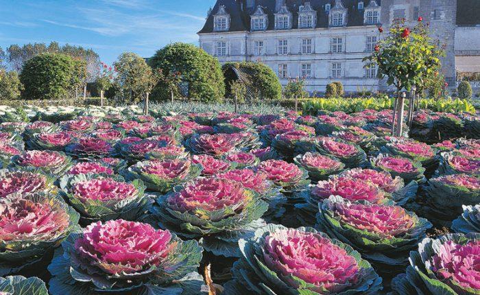 loire-gemuesegarten